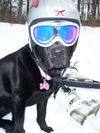 Mabel, the ski dog!